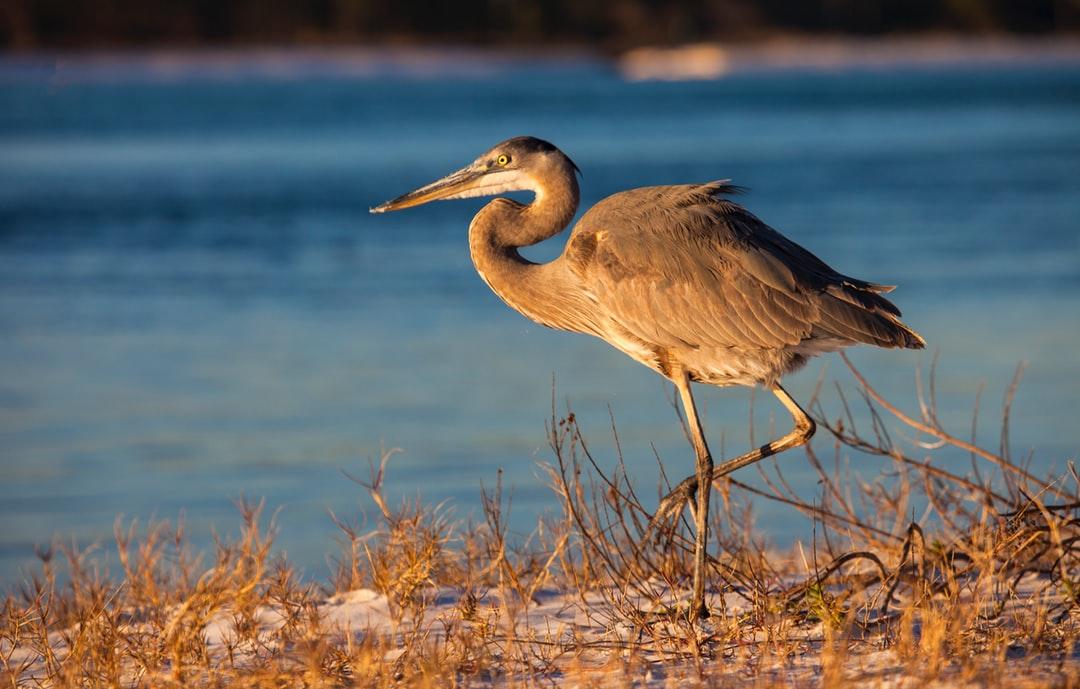 Basic Tips and Ideas to Buy Rental Condos near Pensacola Beach, Fl